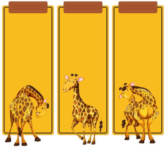 Diferentes puestos de jirafa en banner. vector