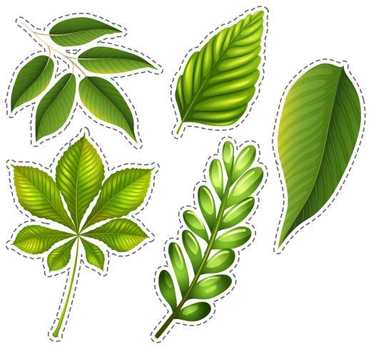 Diferentes tipos de folhas verdes vetor