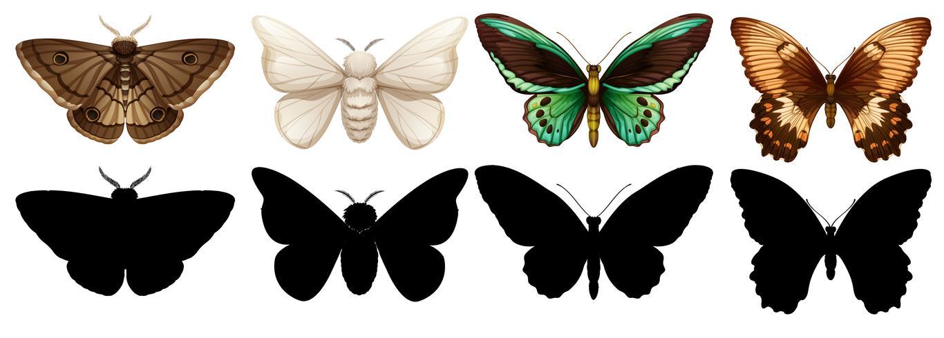 Mariposas de diferentes colores y siluetas vector