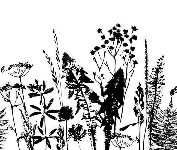 Padrão sem emenda à base de plantas. Fronteira botânica. Fundo de grama vector. vetor