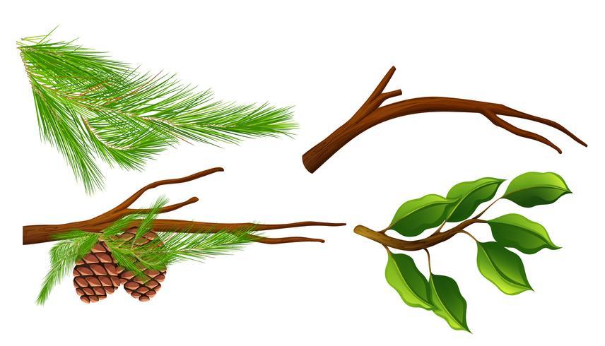 Un insieme di rami di albero