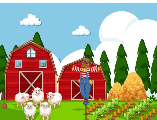 Scène de ferme avec des moutons