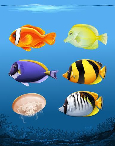 Många fiskar undervattens tema vektor