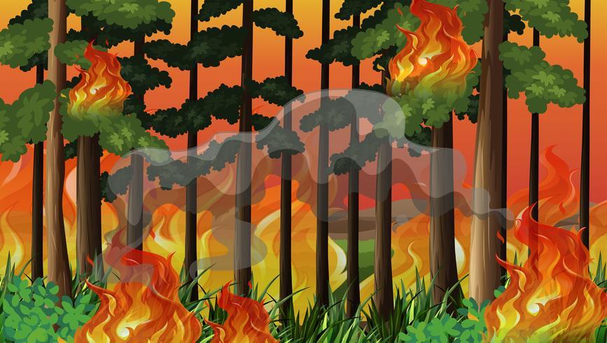 Ein Hintergrund für einen Waldbrand-Unfall