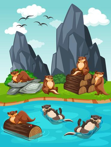 Otters living by the river - Download Free Vector Art, Stock Graphics & Images