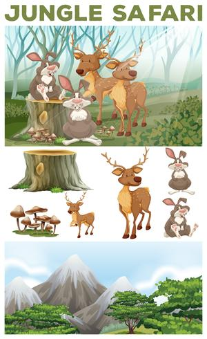 Animales salvajes en el safari por la selva.