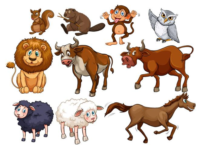 Animales salvajes en varios tipos.