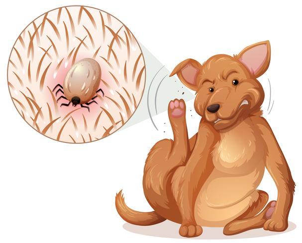 Perro con una pulga vector