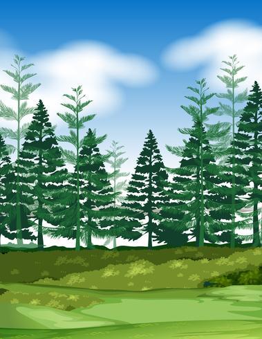 Cena de floresta com pinheiros vetor