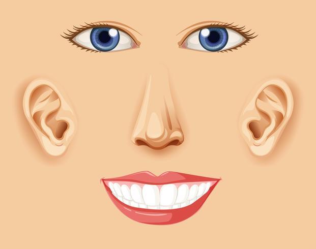 Um elemento facial feliz humano