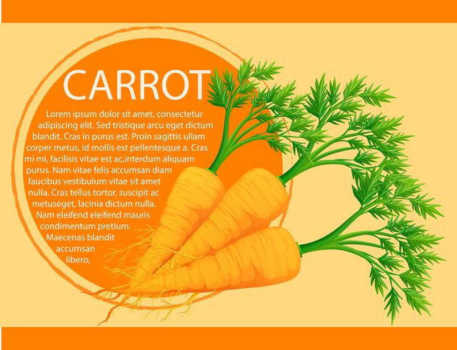 Diseño infográfico con zanahorias frescas.