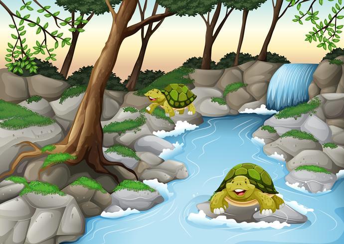 Twee schildpadden die in de rivier leven