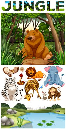 Animales salvajes que viven en la selva.
