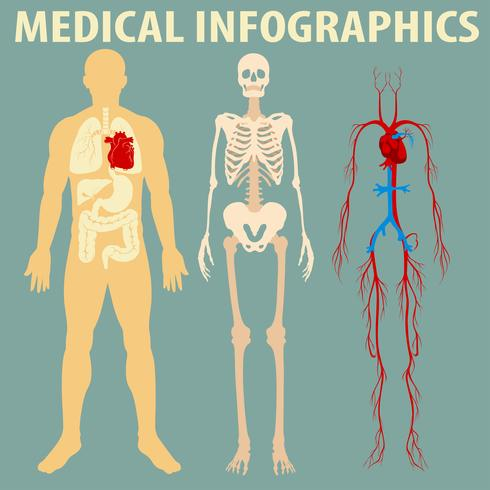 Medizinische Infografik des menschlichen Körpers