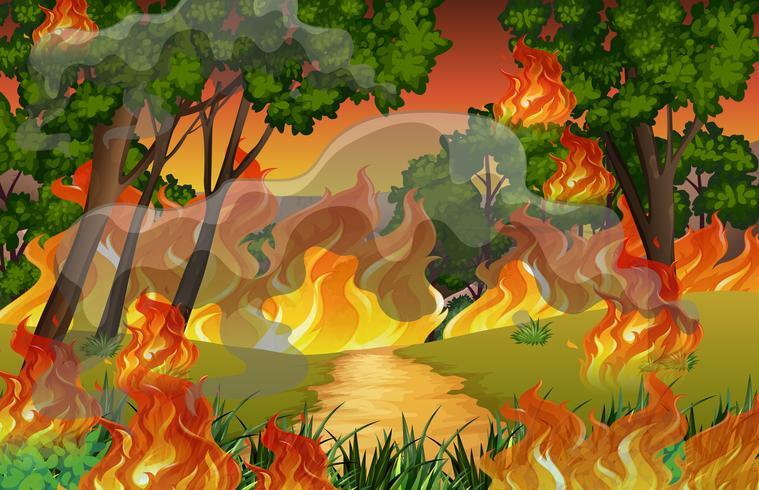 Vuur in het bos