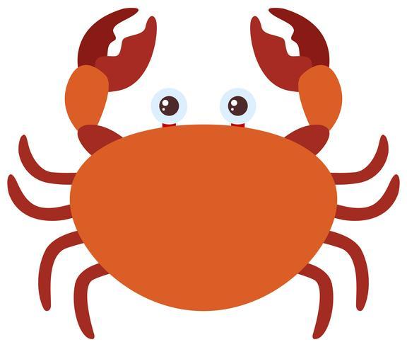 Brown-Krabbe auf weißem Hintergrund