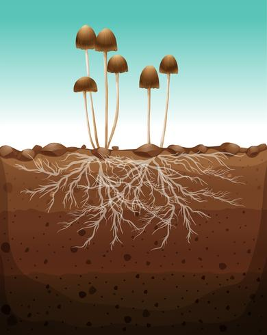 Fresh mushroom growing on land vector