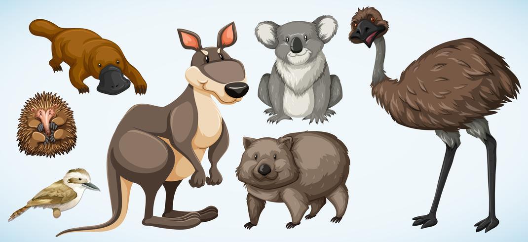 Diferentes tipos de animales salvajes en Australia. vector