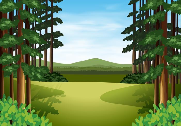 Scene of a beautiful woods