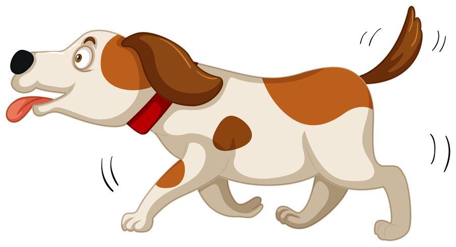 Netter Hund, der auf weißen Hintergrund läuft