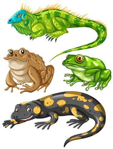 Différents types de grenouilles et de lézards