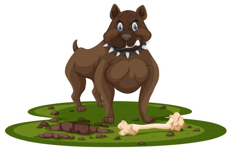 En pitbull och ben