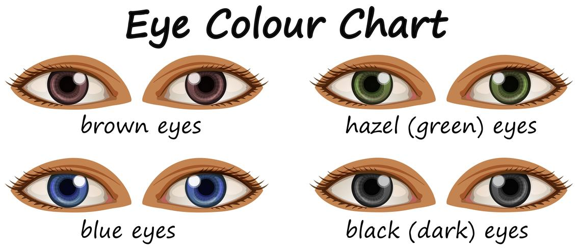 Human eyes with different colors
