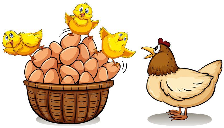 Pollo Y Huevos En Cesta vector