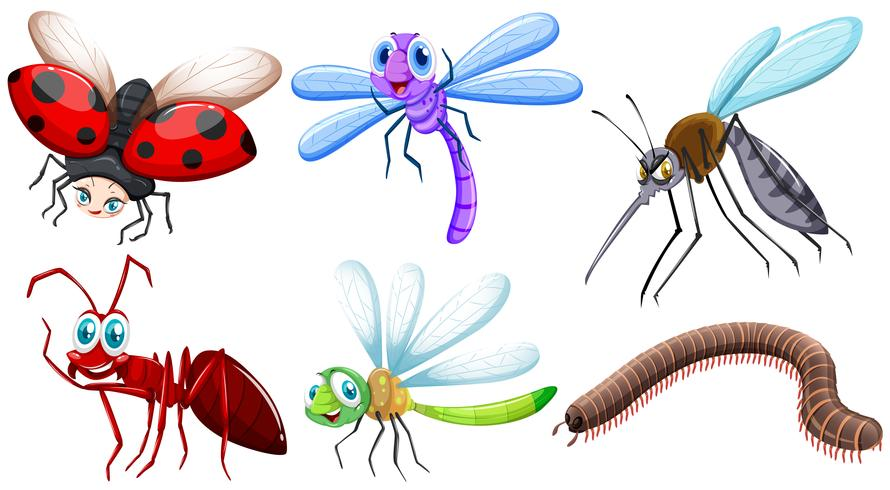 Different kind of insects vector