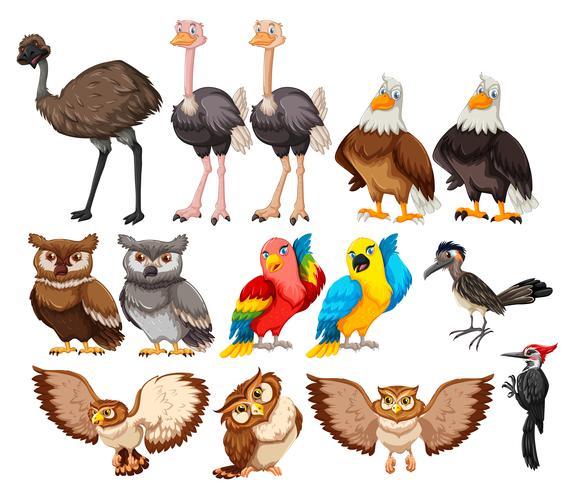 Conjunto de aves sobre fondo blanco