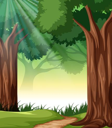 A tropical rainforest background vector