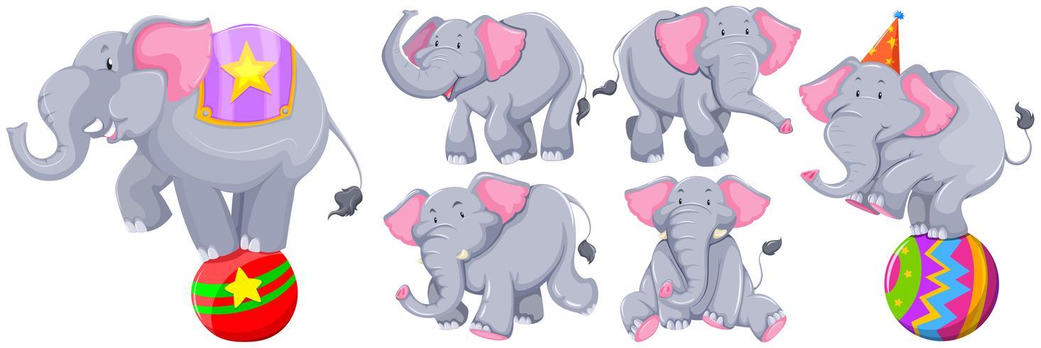 Elefantes cinzentos em diferentes ações