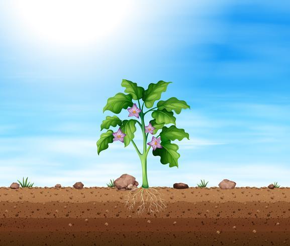 Plant met paarse bloem