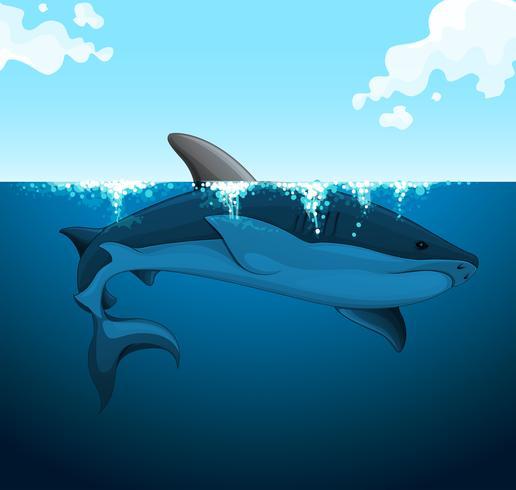 Grote haai die onder het water zwemt vector