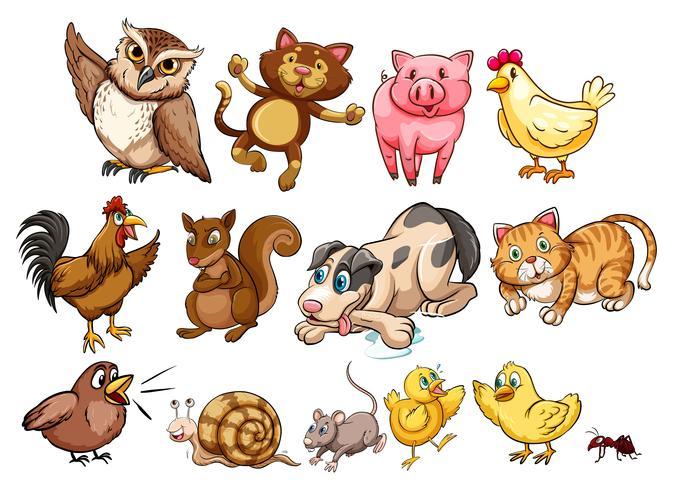 Olika typer av husdjur och husdjur