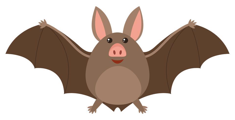 Pipistrello marrone con faccia felice