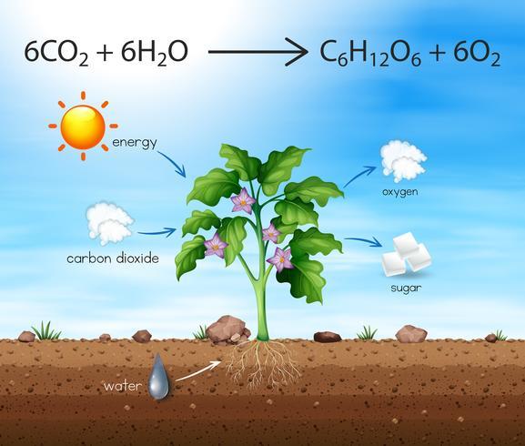 Un processo dell'albero produce ossigeno vettore