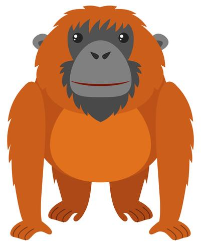 Orang-outan à fourrure brune