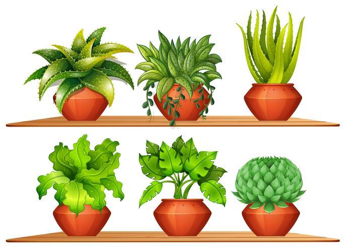 Diferentes tipos de plantas en macetas.
