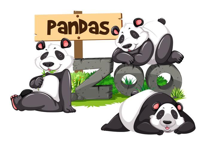 Tres pandas en el zoológico vector