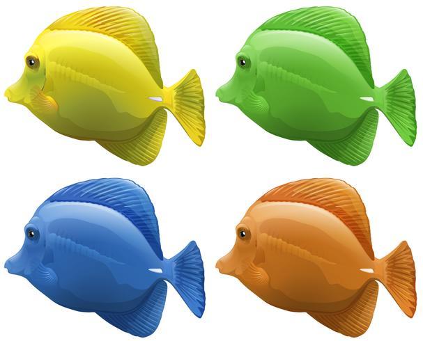 Vier verschiedene Farben von Fischen