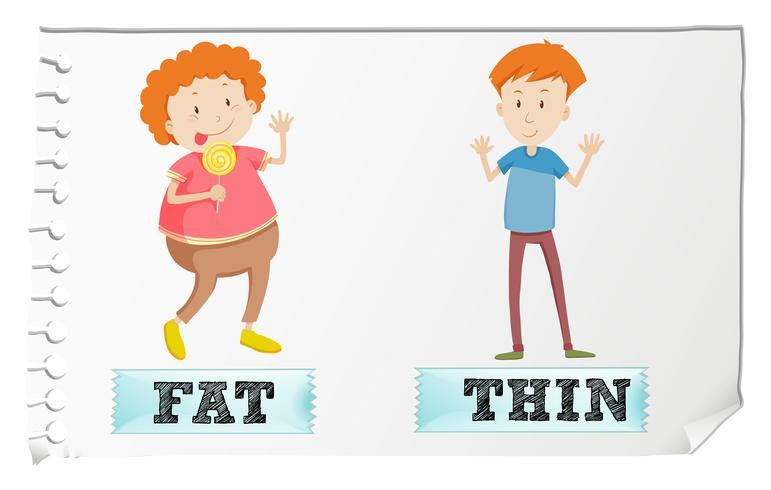 Adjetivos opuestos gordos y delgados.