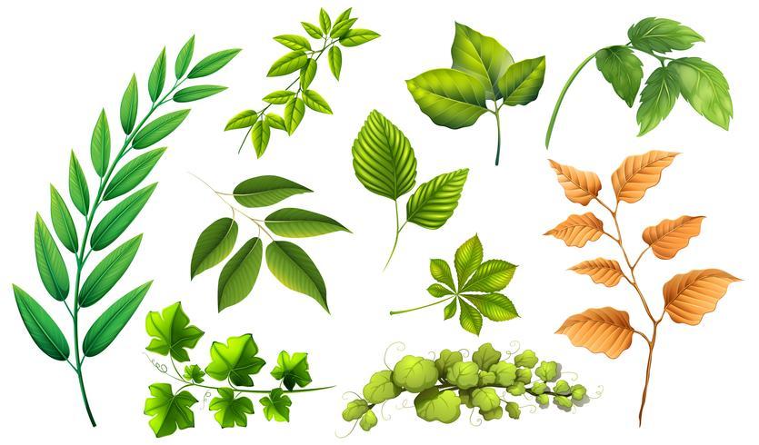 Ensemble de feuilles différentes