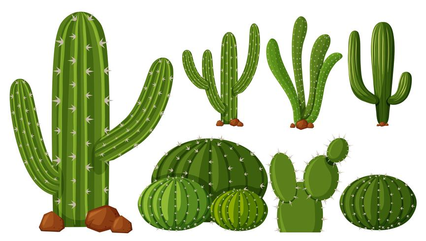 Different types of cactus