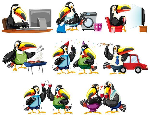 Aves de tucán en diferentes acciones.