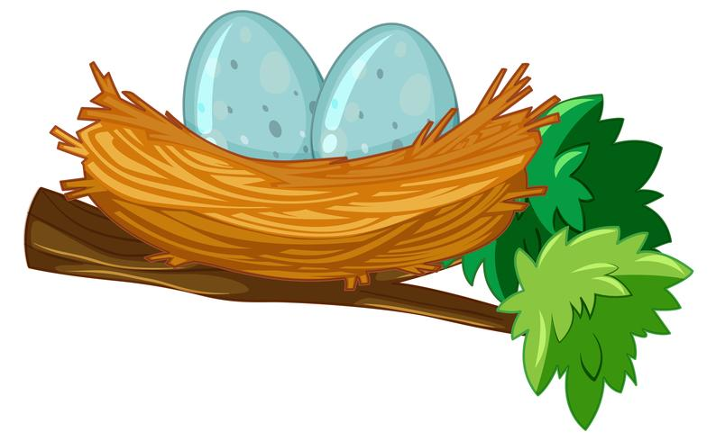 Two eggs in nest vector