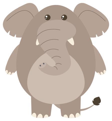 Grijze olifant op witte achtergrond