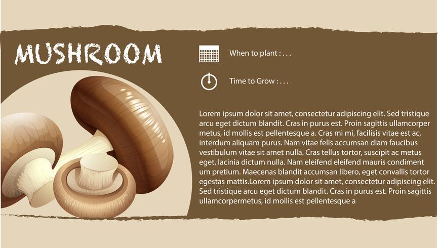 Infographic design with fresh mushroom