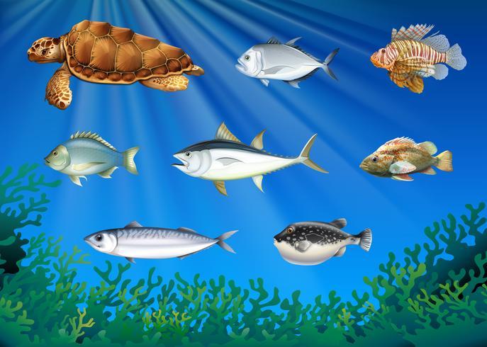 Peces y tortugas marinas bajo el mar.