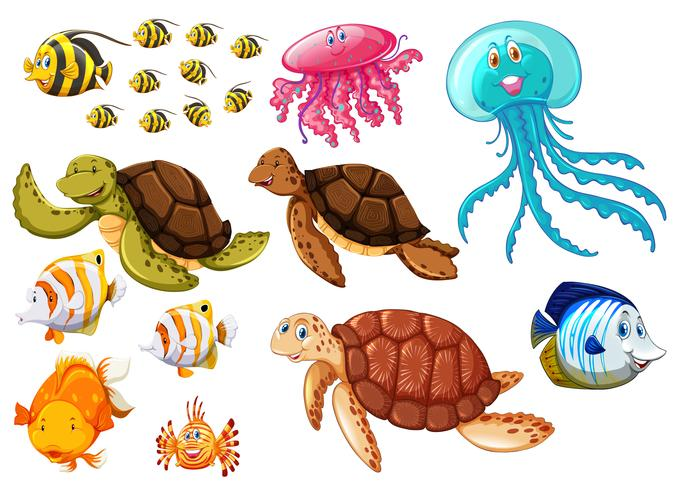 Different types of sea animals